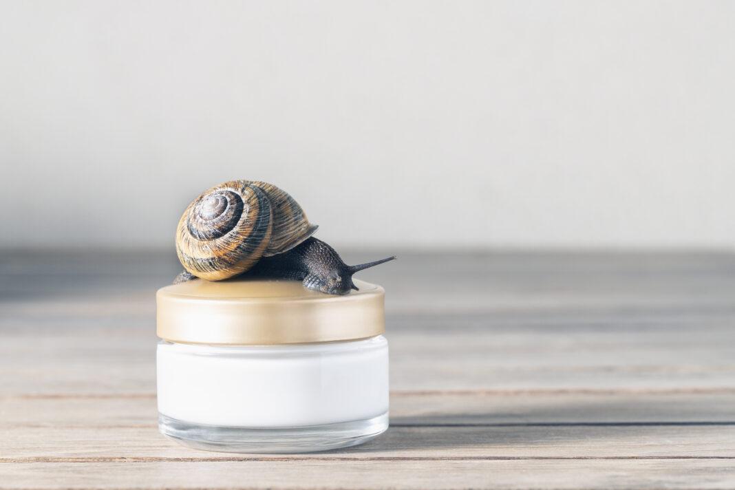 Śluz ze ślimaka - jakie ma właściwości?