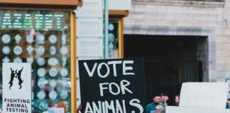 Kosmetyki nie testowane na zwierzętach